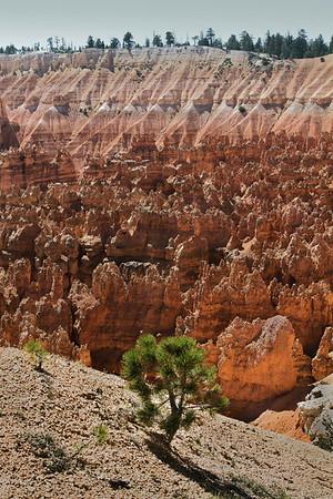 Bryce National Park, #0520