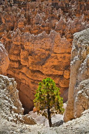 Bryce National Park, #0521