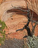 Ruins at Navajo Valley canyon, Arizona, #0283
