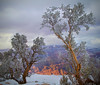 Winter in the Grand Canyon - Arizona #0305