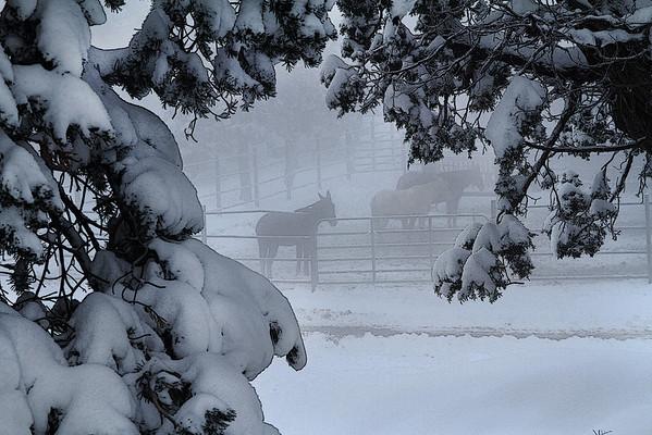 Winter in the Grand Canyon - Arizona: #0313