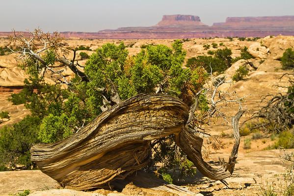 Canyonlands National Park, Utah, #0499