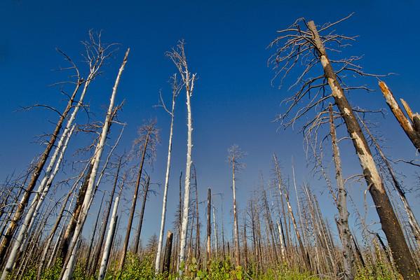 Forest burn near Zion National Park, #0540