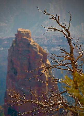 Grand Canyon National Park, north rim, #0547
