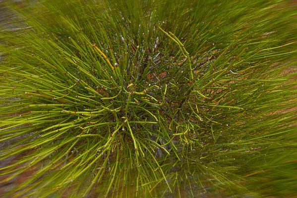 Desert weed at Arches National Park, Utah, #0493