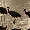 Sandhill Cranes at Bosque del Apache, Socorro, New Mexico  - #0002