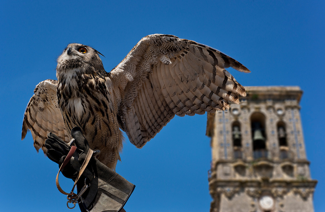 Iberian Royal Owl with church bell in the background.<br /> <br /> Arcos de la Frontera, Andalucia, Spain, 2014