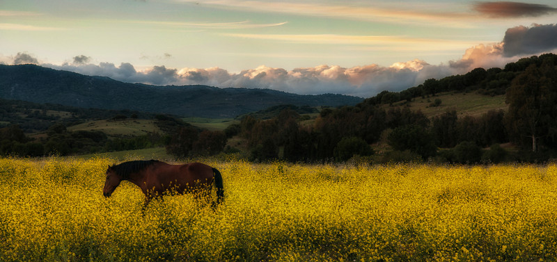 Horse in a field near the village of Jimena.<br /> <br /> Andalucia, Spain.2014