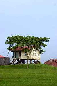 Menonite home shaded by tree at Spanish Lookout, Cayo, Belize.