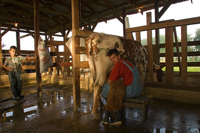 Young boy milking cow while holding little brother in lap, Spanish Lookout, Cayo, Belize.