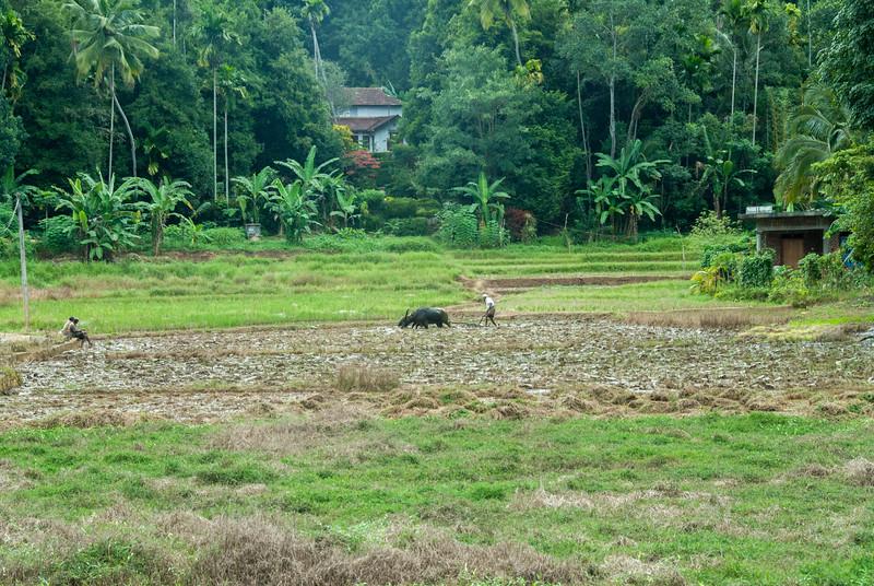 Farming on the side of Kandy-Jaffna Highway, Sri Lanka