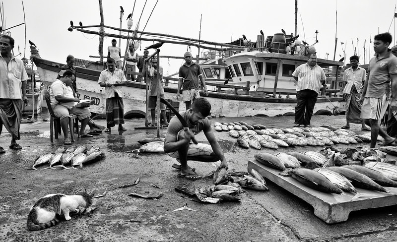 Workers at the fish market in Tangalle.<br /> <br /> Sri Lanka, 2014.