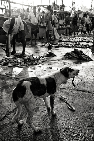 A dog grabs a bite to eat at the Unawatuna fish market.<br /> <br /> Unawatuna, Sri Lanka, 2014.