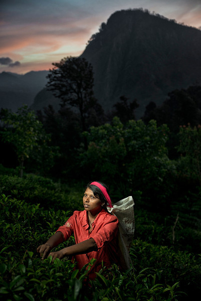Ceylon tea. The humidity, cool temperatures, and rainfall in the country's central highlands provide a climate that favours the production of high quality tea. The industry was introduced to the country in 1847 by James Taylor, the British planter who arrived in 1852.  Tea Plucker in the mountains around the town of Ella.  Sri Lanka, 2014.