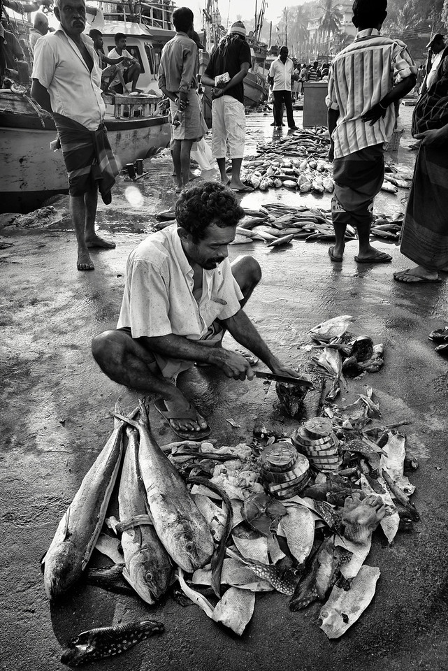 A fisherman prepares the catch of the day before selling it to local restaurants.<br /> <br /> Unawatuna, Sri Lanka, 2014.
