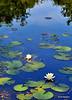Spot Pond, Stoneham, MA