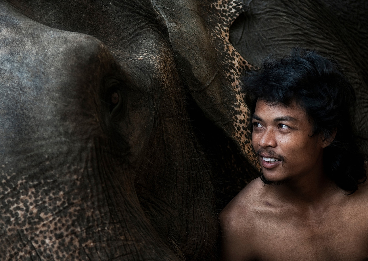 Deeply rooted in Thai culture, elephant training has traditionally been a familial heritage passed down through the generations. Before 1989, most domestic elephants were used for logging business and forest service to haul logs up mountains. This became illegal as widespread destruction of Thailand's forests resulted in worsening monsoons. Unlike the elephant populations of India and Africa, 95% of Thailand's elephants are domesticated working elephants and privately owned. Today most work for mahouts is in the tourist business, since elephant rides are popular among travelers to Thailand.<br /> <br /> Ko Chang, Thailand, 2011