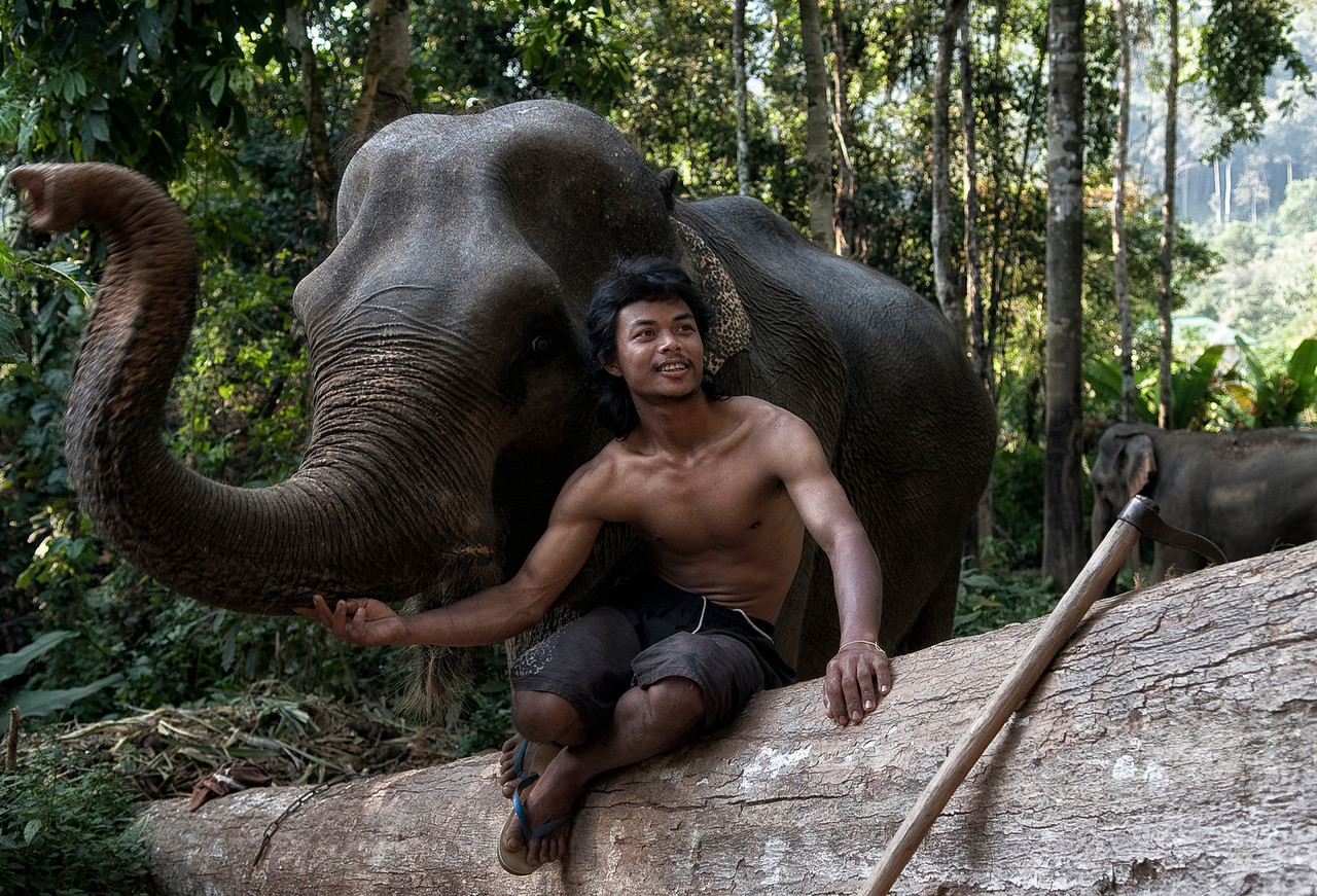The most common tools used by mahouts are chains and the Aṅkuśa (or ankus, anlius)–a sharp metal hook used in the training and handling of the elephant by stabbing the elephant in the head, and in areas like the mouth and inner ear, where the animal is most sensitive.<br /> <br /> Ko Chang, Thailand, 2011.