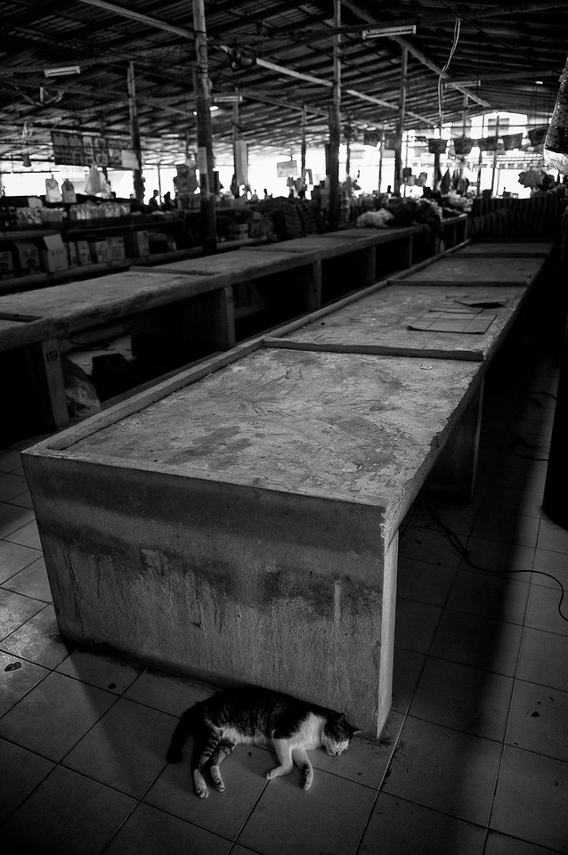A cat sleeps at the end of a busy day at a fish market.<br /> <br /> Thailand, 2012