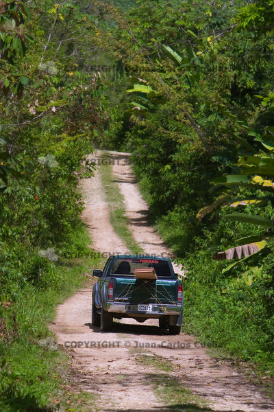 Pickup truck on dirt road to Lubaantun in Southern Belize, Toledo.