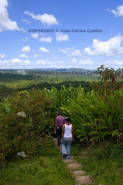 On a hilll overlooking part of the Columbia Forest Reserve in Toledo, Belize.