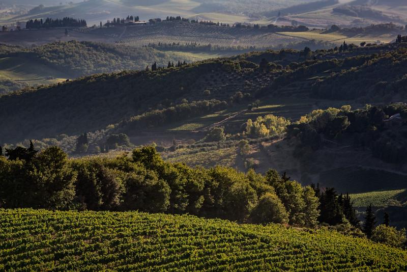 Vineyards in Castellina Chianti