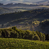 Vineyards in Castellina Chianti