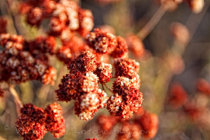 Desert flowers taking in the last light of the day