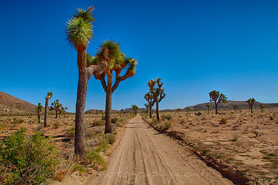Looking down the dirt road - Joshua Tree National Park