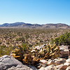 looking down the Valley - Joshua Tree National park