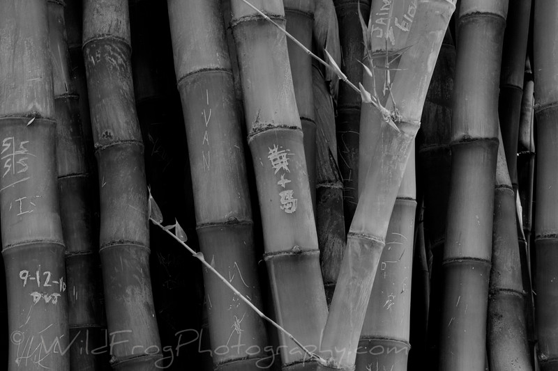 Bamboo - Botanical Gardens - Huntington Library