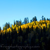 Sunrise on the Aspens