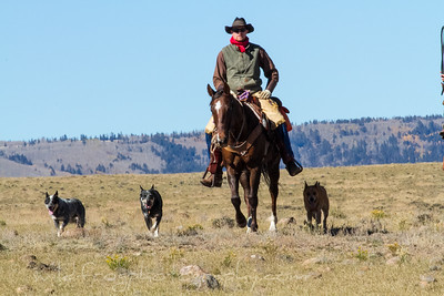 Carson National Forest Cattle muster