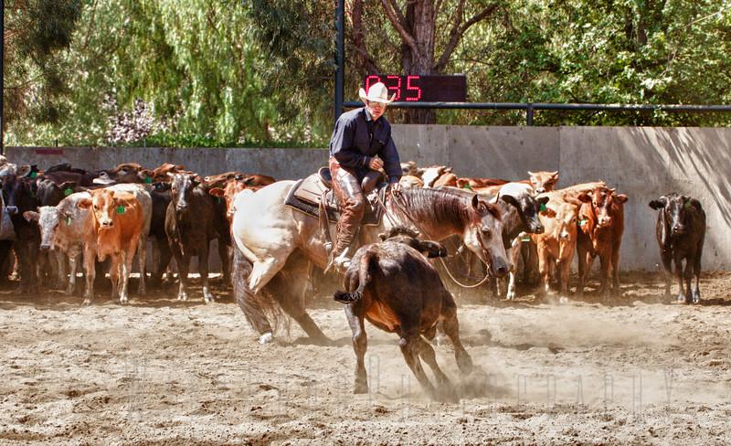 Cutting Horse Show, Temecula NCHA <br /> wisehartcutting.com