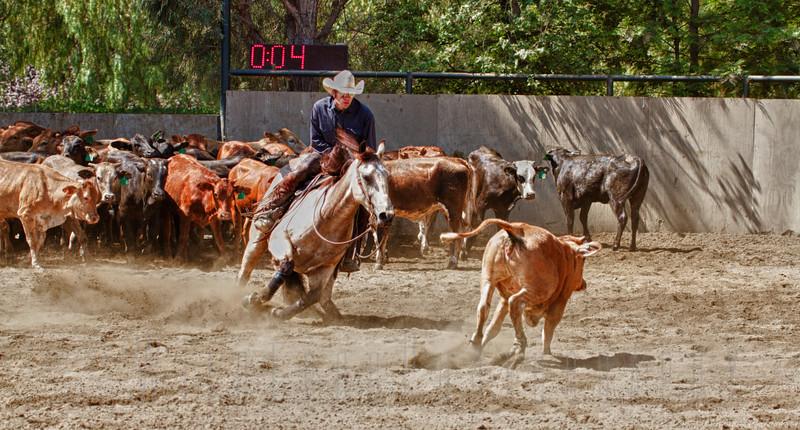 Temecula Cutting Horse Show - California