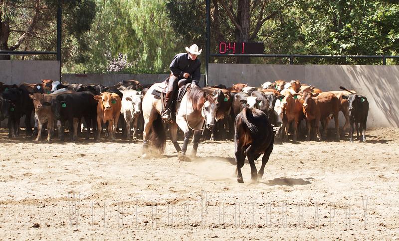 Working Cutting Horse - California