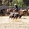 Working Cutting Horse,Temecula - California