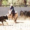Temecula - California - Cutting horse show