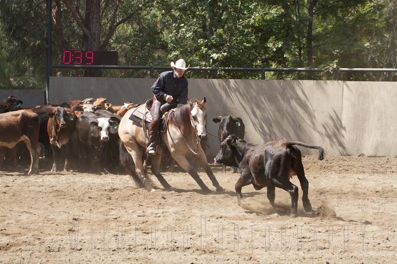 Working Cutting Horse - California, NCHA