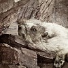 Chill time,Marmot