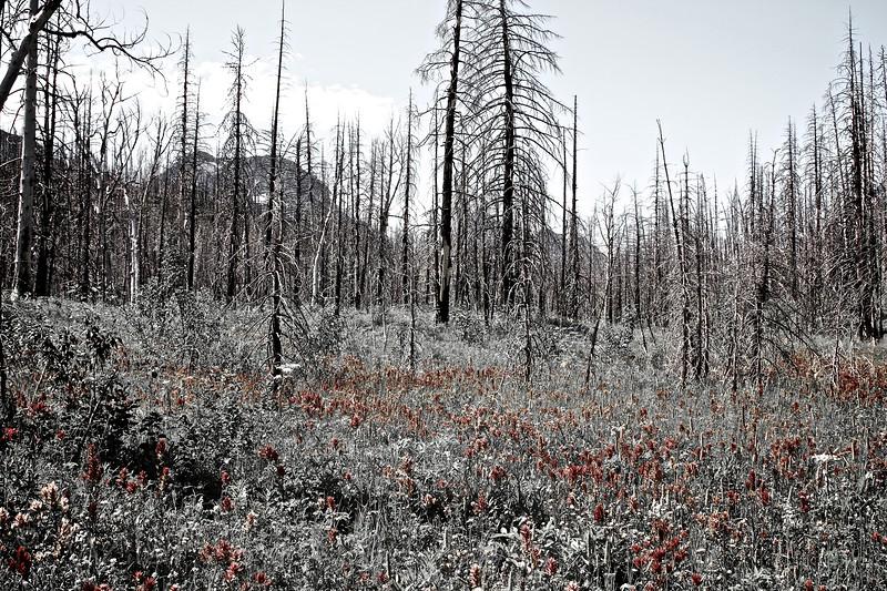 Red Eagle Lake trail,East Glacier