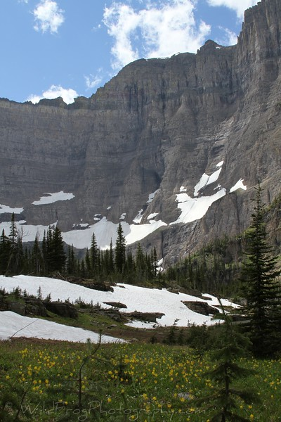 Wild Flowers,Iceberg Lake,Many Glacier