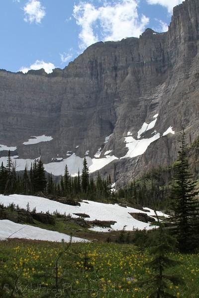 Wild Flowers,Iceberg Lake,Many Glacier