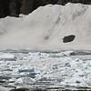 Lookng Down to Iceberg Lake,Many Glacier