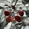 Flathead Lake Cherries