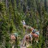 Mule Train, Rose Creek