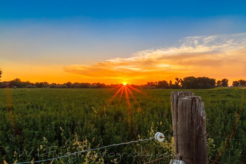Sunset over the alfalfa field, Jerome