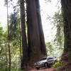 Parked between the Redwoods on the Howland Hill Road - Jedediah Smith Redwoods State Park