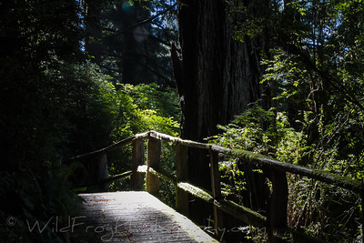 Forest walk- Redwood National Forest - CA