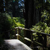 Forest walk- Redwood National Forest - CA